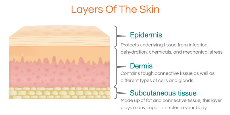 Layers-of-the-skin-1